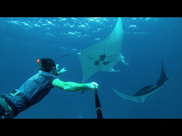 Swimming with Manta Rays - Learning By Doing Ep76