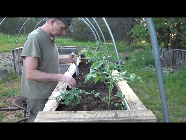 Planting Our New Raised Greenhouse Grow Beds