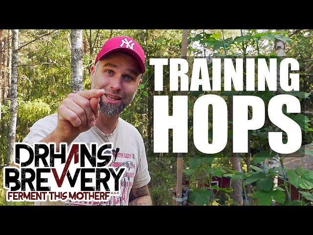 Training hops  - Hop Growing 101 Part 4