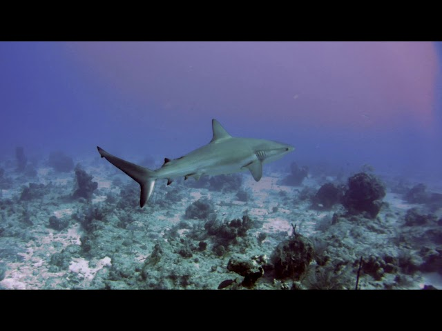 5 I love diving at Beaches Turks and Caicos Jan 2020